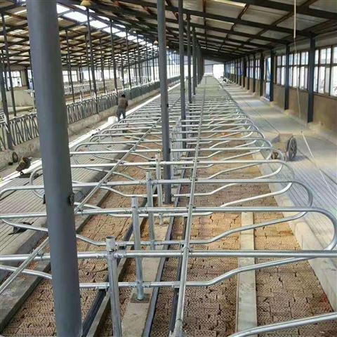 养殖场牛卧床的维护和舒适度管理