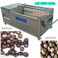 TQX-700小型毛刷辊果蔬清洗机自动洗马蹄荸荠机器