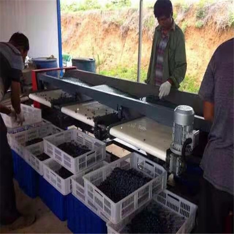 自由分选蓝莓的机器 不伤果粉蓝莓分选机