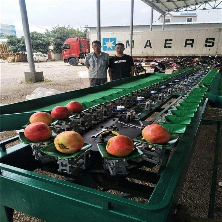甜瓜分选机器甘肃水果分级设备*