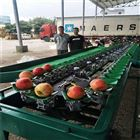 XGJ-SZ甜瓜分选机器甘肃水果分级设备厂家直销