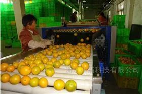 柑橘分级机