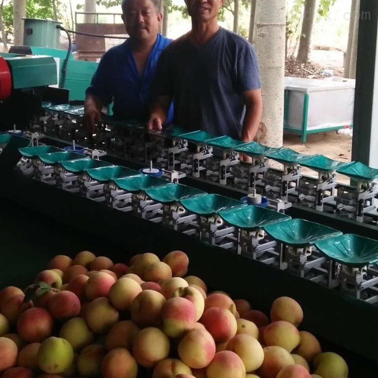 奉化水蜜桃选果机 桃子分拣大小的设备