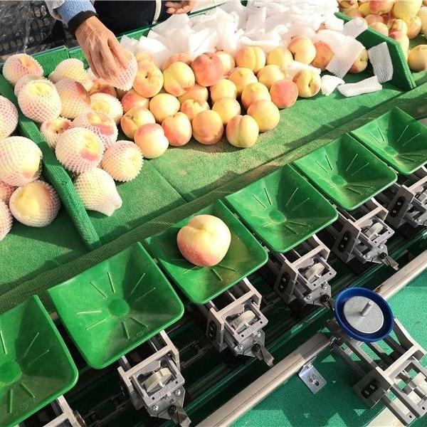 广东佛山桃子分选机水果重量分级款式多