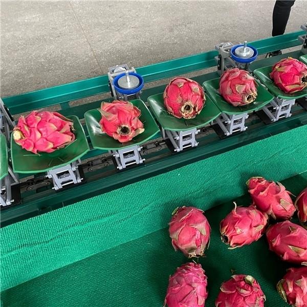 广西火龙果分选机 重量分选鸡蛋都可以用