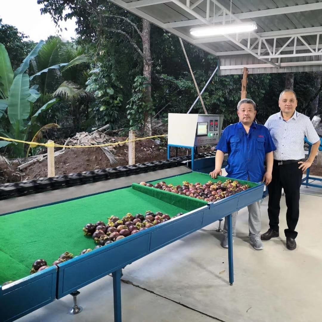 海南脐红猕猴桃分选机厂家 分果机供应商