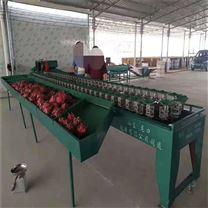 南宁火龙果选果机 自动选果 效率高的设备