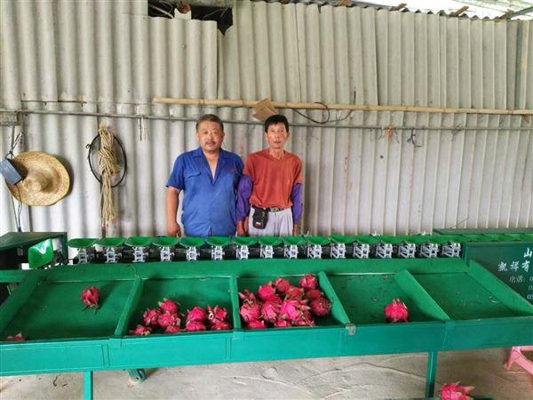 广西玉林分果蔬大小的机器 火龙果分选机