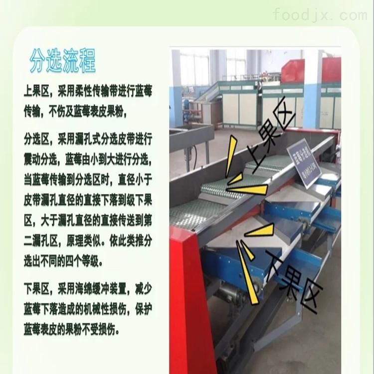 江苏新型蓝莓选果机 科学分选大小的机器