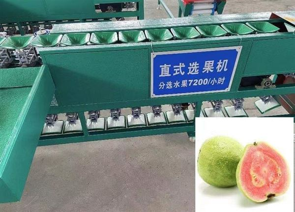 小型石榴分果机水果分级机分拣机