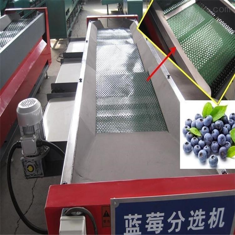 不伤果粉的蓝莓选果机 分选效率高的机器