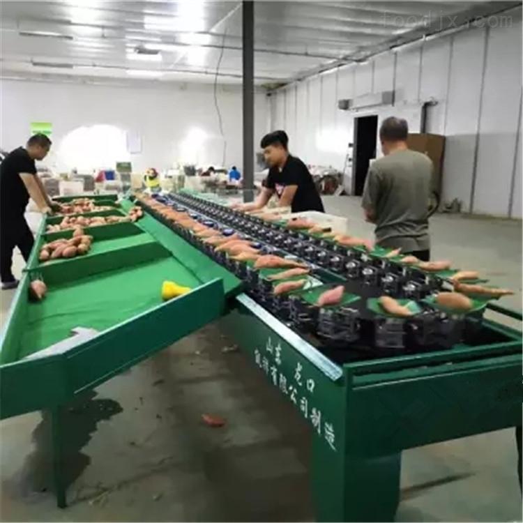 赣南红蜜薯分级机 称重分选红薯大小的机器