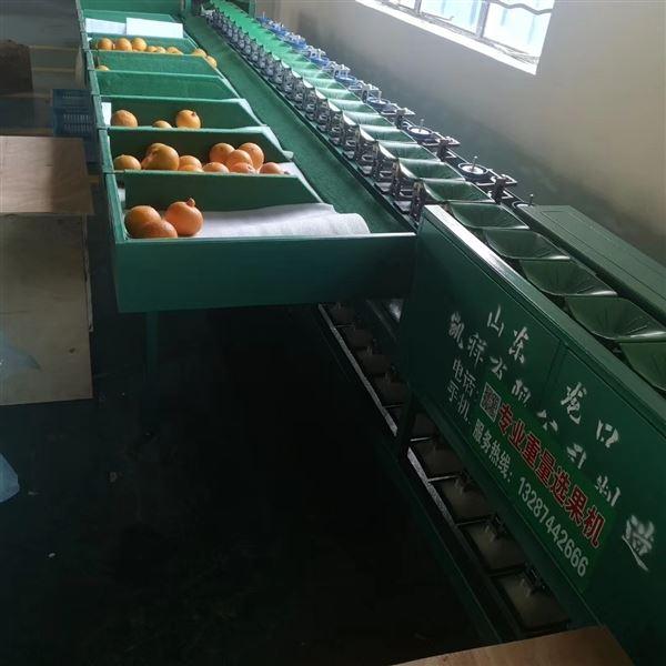 浙江象山红美人柑橘选果机  不伤果皮