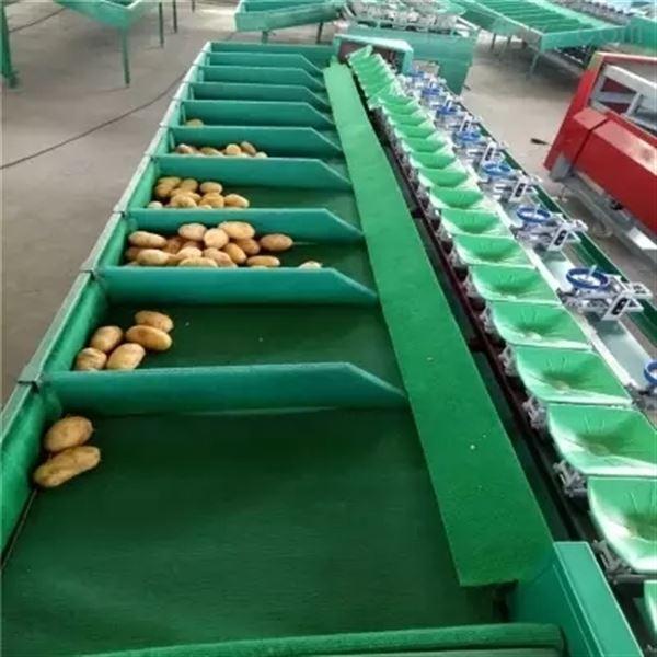 河北邢台土豆分选机  速度快  效率高