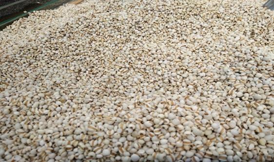 全谷物消費潛力加速釋放 糧食脫殼機發揮科技支撐作用
