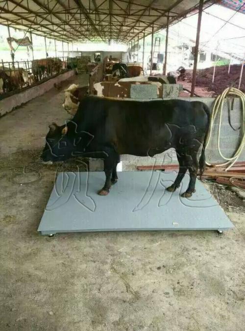 牛称重用畜牧秤丨称牛电子称丨牛用3吨地磅