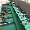 XGJ-Z眉县猕猴桃选果机 重量分果 不伤果的机器